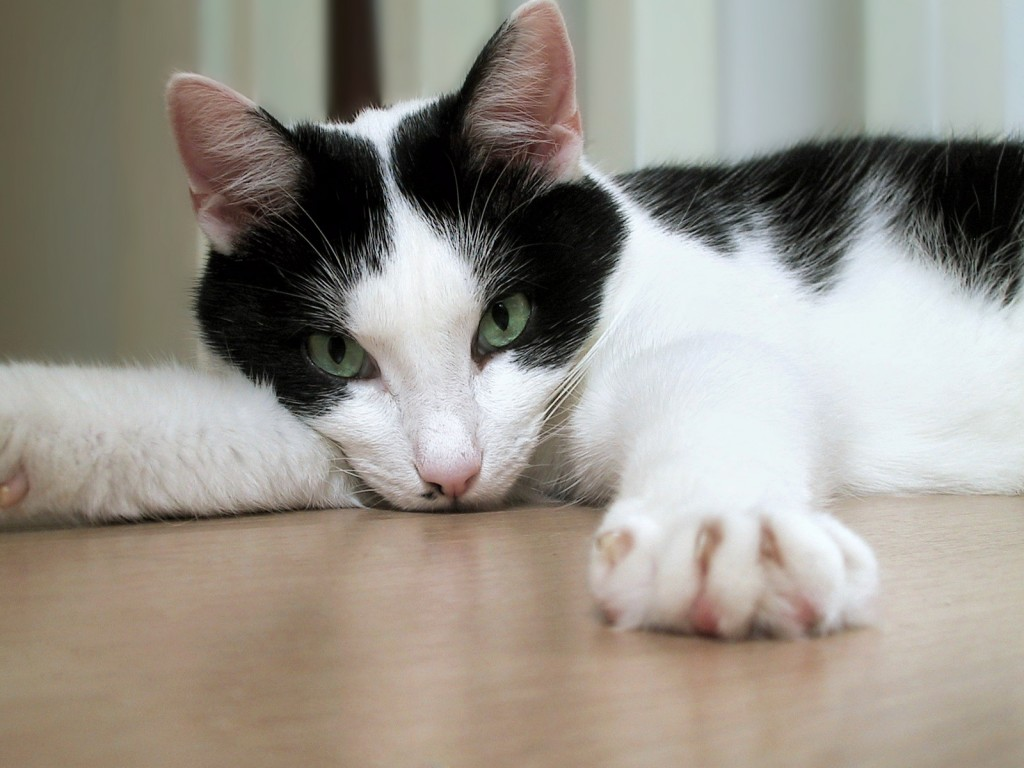 CAT DECLAWING ILLEGAL IN NYC