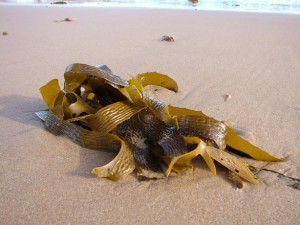 seaweed harvesting ban new hampshire